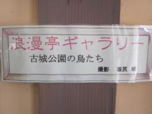 高岡市観光協会のブログ-浪漫亭ギャラリー(古城公園の鳥たち)