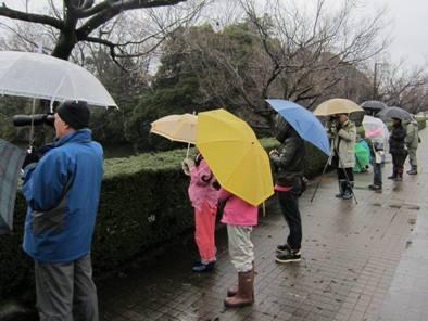 大仏君の日記帳(高岡市観光協会のブログ)-高岡古城公園での探鳥会
