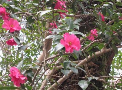 高岡古城公園の花