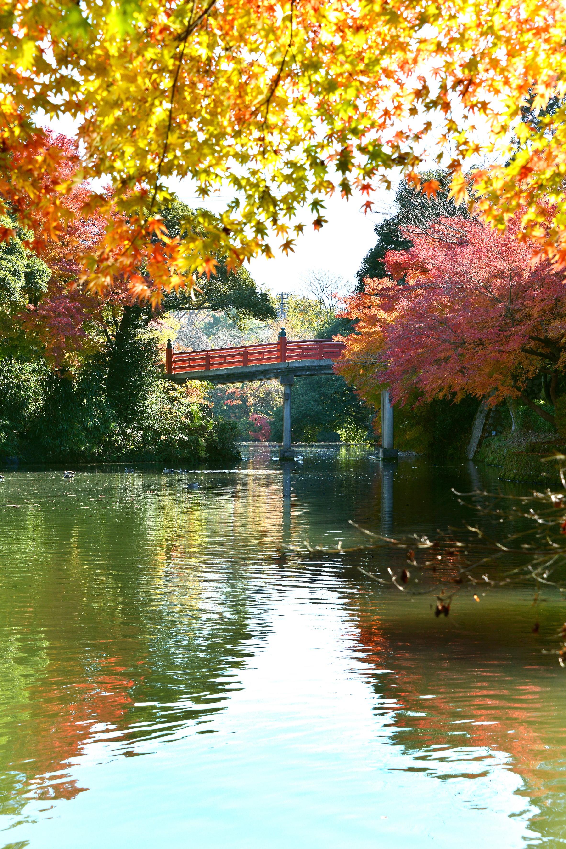 高岡古城公園画像2